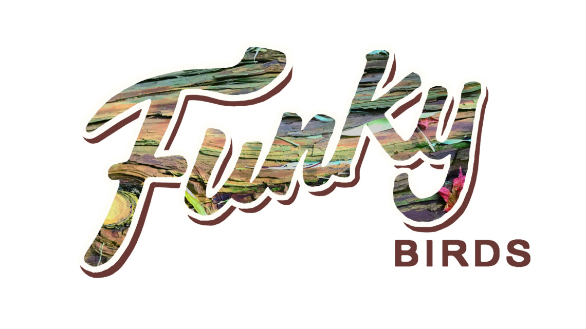 funkybirdsActivityfoundlogo